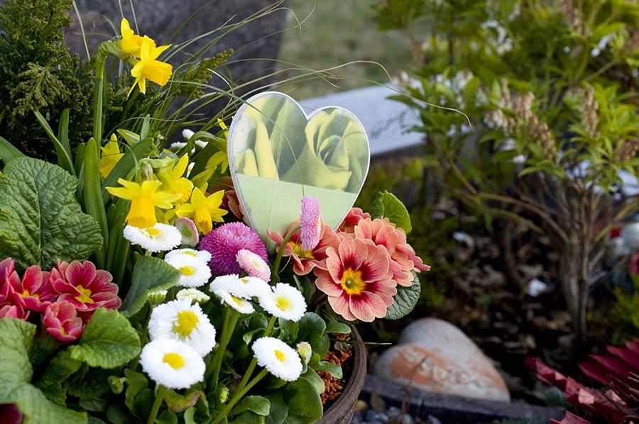 fleurs coupées ou en pot, nos bouquets, nos gerbes, nos coussins de fleurs, nos couronnes à Saint-Jean-de-Braye | Aurell fleurs